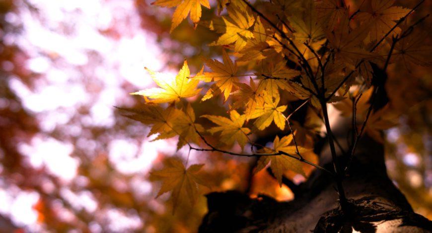 Feel good en automne, nos conseils