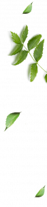Marque Nym: les feuilles de Neem
